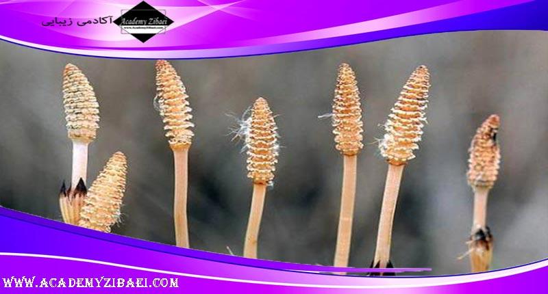 روش استفاده از گیاه دم اسب برای تقویت رشد مو 👩